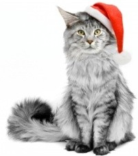 Cat in a Christmas Hat 201x227